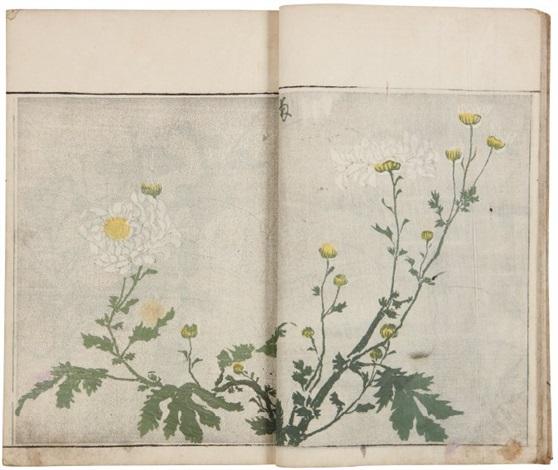 Sôka Ryakuga Shiki Méthode De Dessins Rapides De Fleurs Et