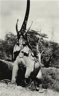 reaching elephant, kenya by peter beard