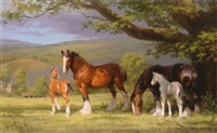 mares and their foals by barrie linklater