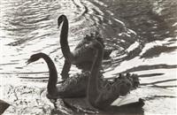 swans by alexander rodchenko