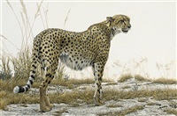 cheetah at amboseli by robert bateman
