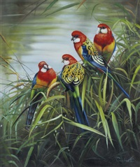 rosellas by greg postle