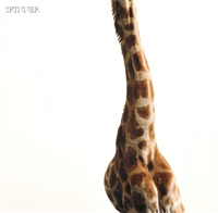 giraffe neck by james balog
