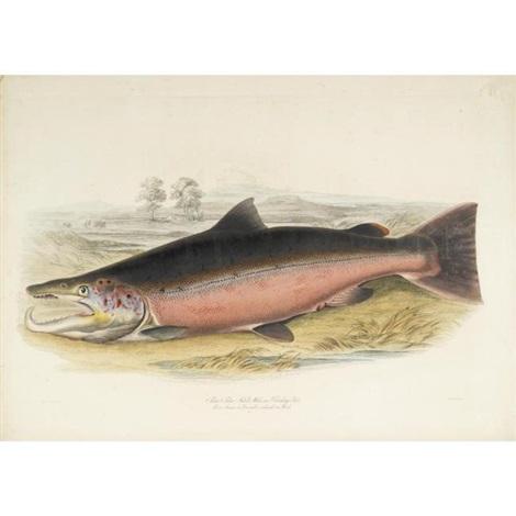 british salmonidae (bk w/12 works by w.h. lizars, folio) by william (sir) jardine (editor)