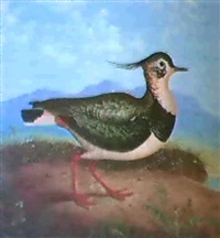 a lapwing & a woodcock by james hill