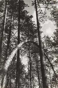 sosny (pines) by alexander rodchenko
