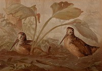upland game birds and waterfowl of the united states series (13 works) by alexander pope