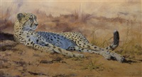 cheetah repose by paul apps
