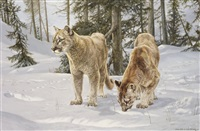 the inquisitiveness of youth: young mountain lions in the early morning snow by willem de beer