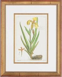 plant studies (8 works) by pierre bouchoz