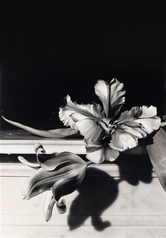 tulips oyster bay long island by horst p horst