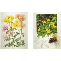 fuji musume, a yellow seedling and ogura nishiki and chelidonium japonicum: a pair by raymond booth