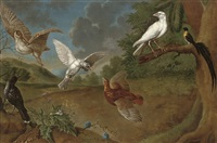 a landscape with a woodcock, a partridge, a bird of paradise and other birds by carl josef adolph