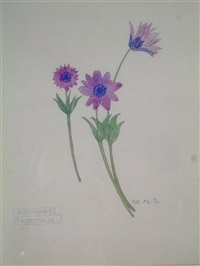 anemones, taormina by mary newbery sturrock