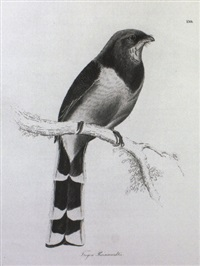 illustrations of ornithology by william (sir) jardine (editor)
