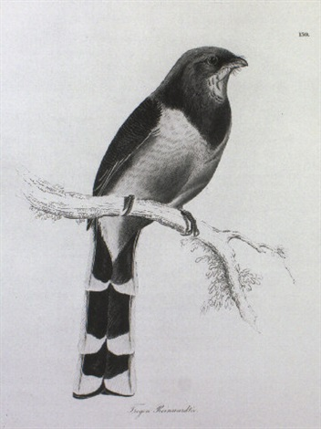 illustrations of ornithology by william sir jardine editor