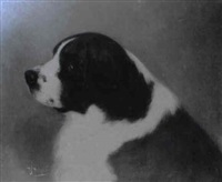 a black and white st. bernard by h. j. hildyard