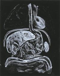 intestine by kiki smith