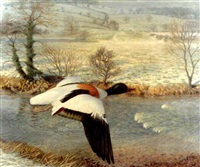 mallard in flight over a winter landscape by raymond booth