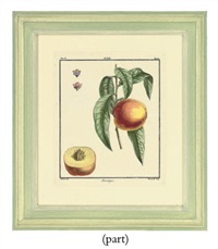 fruit studies (from traite des arbres fruitiers) by claude aubriet