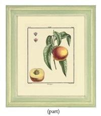 fruit studies (from traite des arbres fruitiers) by claude aubriet