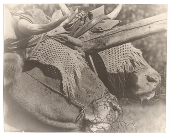 bêtes de somme by pierre dubreuil