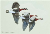 red-breasted geese by peter markham scott