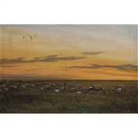 a gaggle of geese by peter scott