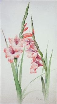 gladiolen by franz lenk