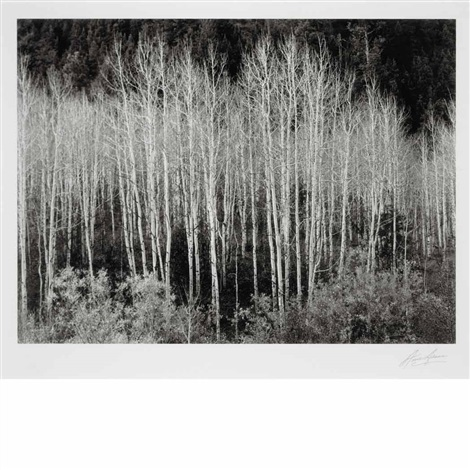 aspens at dawn dolores river new mexico by ansel adams