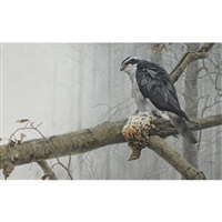goshawk and roughed grouse by robert bateman