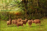 sheep and ram in a pasture by edward burrill