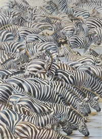 confusion at the edge: zebras watering by lindsey selley