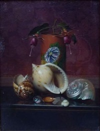 nature morte aux coquillages by auguste joseph marie de mersseman