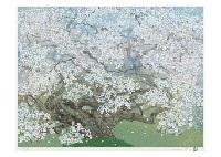 mountain cherry blossoms by chinami nakajima