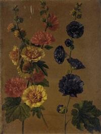 etudes de roses trémières by adolf (carl) senff