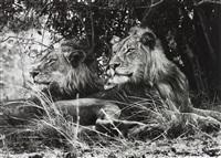 kafue national park, zambia by sebastião salgado