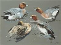 etude de canards siffleurs (study) by patrice bac