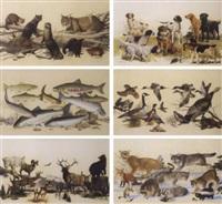 western north america wildlife series by richard amundsen