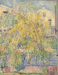 laburnum tree by louis saalborn