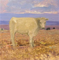 cattle on the bog by jerymiah hoad