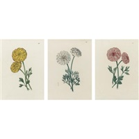 varieties of ranunculus (4 works) by edwin dalton smith