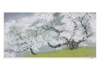 cherry blossoms by chinami nakajima