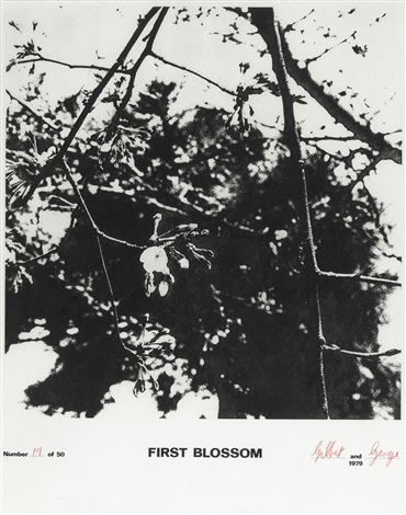 first blossom by gilbert and george