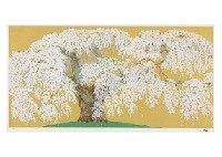 cherry blossoms in kanda by chinami nakajima
