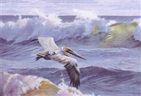 the pelican by matthew hillier