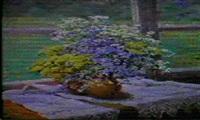fleurs des champs by anatoli fomine