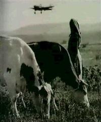 la prairie by olga ignatovich