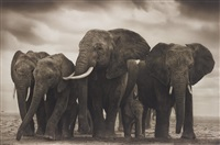 elephant five, amboseli by nick brandt