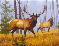 elk by john demott